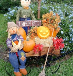 Pumpkin Patch_s
