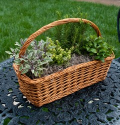 Photo courtesy of www.Givingplants.com